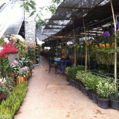 Photo taken at Siam Orchid Center (ศูนย์กล้วยไม้สยาม) by Kidz D. on 11/7/2015