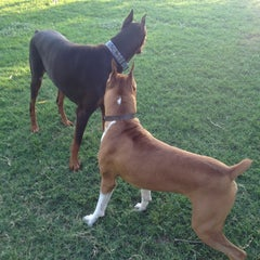 Photo taken at White Rock Lake Dog Park by Scott H. on 9/1/2012