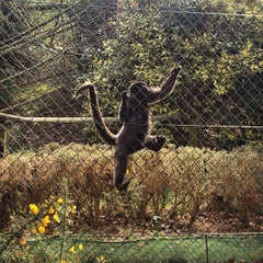 Photo taken at Monkey World - Ape Rescue Centre by Ana G. on 4/5/2015