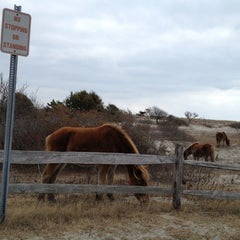 Photo taken at Assateague Island National Seashore (Maryland) by Carrie G. on 3/3/2013