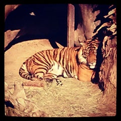Photo taken at Los Angeles Zoo and Botanical Gardens by eliztesch on 1/11/2013