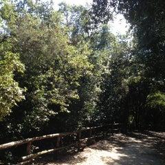 Photo taken at Riserva naturale Tor Caldara by Flavia P. on 8/31/2013