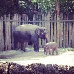 Photo taken at Fort Worth Zoo by Matt M. on 8/10/2013