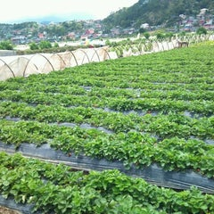 Photo taken at Strawberry Farm by chorls s. on 4/24/2012