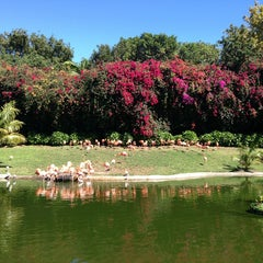 Photo taken at Jungle Island by Natalia-Arina D. on 2/17/2013