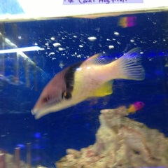 Photo taken at Moby Dick Pet Store by Jewels (Linda) S. on 1/17/2013