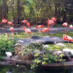 Photo taken at Zoo Miami by Hercules M. on 4/16/2013