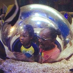 Photo taken at Adventure Aquarium by James N. on 7/6/2013