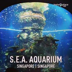 photo taken at s e a aquarium by tony tin n on 4 6 2013