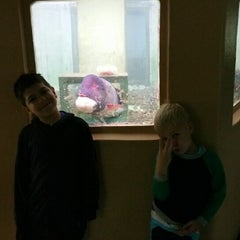 Photo taken at Morro Bay Aquarium by Lady D. on 4/2/2015