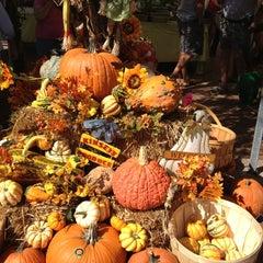 Photo taken at Sarasota Farmers Market by Dave H. on 10/13/2012