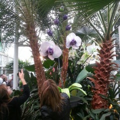 Photo taken at Volunteer Park Conservatory by Anthonio P. on 4/12/2013