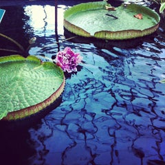 Photo taken at Monet's Garden at The New York Botanical Garden by Christine C. on 10/21/2012