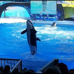 Photo taken at SeaWorld Orlando by Andrei B. on 3/6/2013