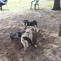 Photo taken at Estero Community Park Dog Run by Chris G. on 3/9/2013