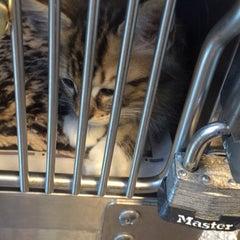 Photo taken at West LA Animal Shelter by Samantha M. on 8/16/2015
