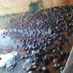 Photo taken at Jurong Frog Farm by Yatie Y. on 11/9/2014
