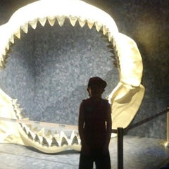 Photo taken at Museum of Science & Industry (MOSI) by Jenn A. on 6/12/2013