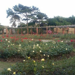 Photo taken at Southsea Rose Garden by Matthew F. on 8/7/2015