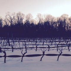 Photo taken at Old Field Vineyard by Chris S. on 2/15/2015