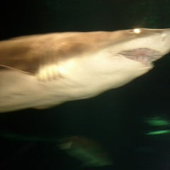 Photo taken at Sharks Underwater Grill by Alex C. on 5/7/2013