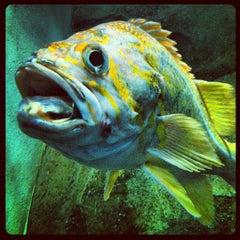 Photo taken at Oregon Coast Aquarium by Katie R. on 9/22/2012