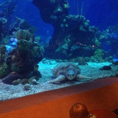 Photo taken at Coral Reef Restaurant by Raquel A. on 9/27/2012