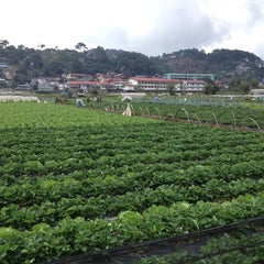 Photo taken at Strawberry Farm by Stefanie S. on 3/29/2013