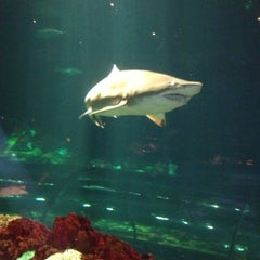 Photo taken at Sharks Underwater Grill by Julia C. on 1/25/2013