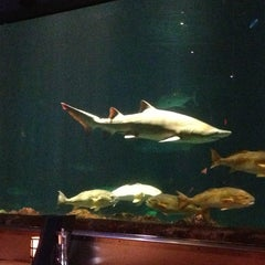 Photo taken at Sharks Underwater Grill by Sky on 4/9/2013