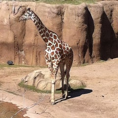 Photo taken at Dallas Zoo by Amanda L. on 3/15/2013