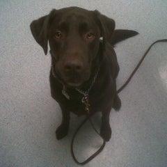Photo taken at Perkiomen Animal Hospital by Jenny B. on 1/9/2012