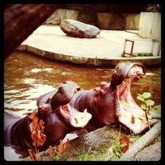 Photo taken at Zoo Praha | Prague Zoo by Petr M. on 9/1/2012