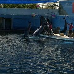 Photo taken at Oasis Sea World (โอเอซิส ซีเวิลด์) by Namon N. on 7/21/2012