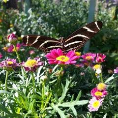 Photo taken at Desert Botanical Garden by N L. on 4/20/2013