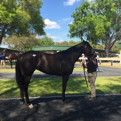 Photo taken at Ocala Breeders Sale by Nikki S. on 3/17/2015