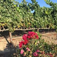 Photo taken at Balletto Vineyards & Winery by Randy J. on 8/23/2015