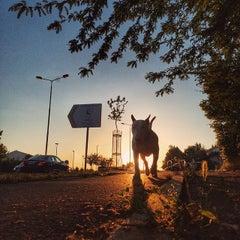 Photo taken at Maxi by Borko S. on 6/2/2015