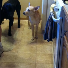 Photo taken at Dog Day Getaway by RaeLynn on 4/9/2014
