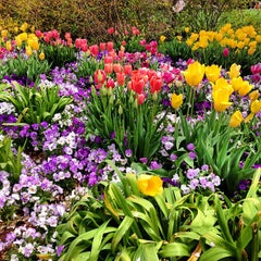 Photo taken at Dallas Arboretum and Botanical Garden by Carter S. on 3/30/2013
