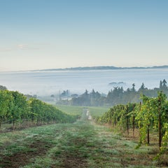 Photo taken at Winter's Hill Estate Vineyard & Winery by Winter's Hill Estate Vineyard & Winery on 10/28/2014