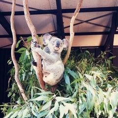 Photo taken at Lone Pine Koala Sanctuary by Alyssa K. on 5/1/2013