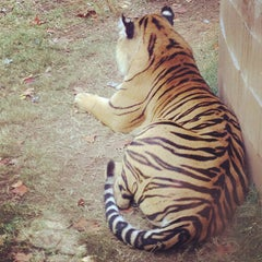 Photo taken at Zoo Atlanta by StephQJ on 10/26/2012