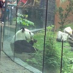Photo taken at Zoológico de Chapultepec by Vania N. on 4/7/2013