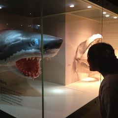 Photo taken at South Australian Museum by Lookwa on 5/11/2013