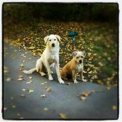 Photo taken at Garfildo by Dorottya K. on 10/22/2012