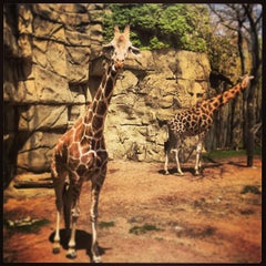 Photo taken at Lincoln Park Zoo by Conrad W. on 5/12/2013