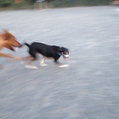 Photo taken at Baron Cameron Dog Park by Emily H. on 9/14/2012