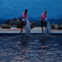 Photo taken at Oasis Sea World (โอเอซิส ซีเวิลด์) by Adirake on 9/15/2012