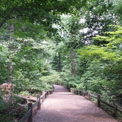 Photo taken at NYBG Forest by Thomas Z. on 8/10/2014